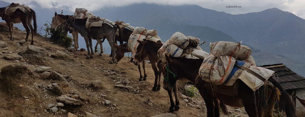 Mules to Nunthala